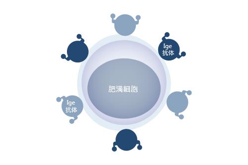 Ige抗体が肥満細胞に付着