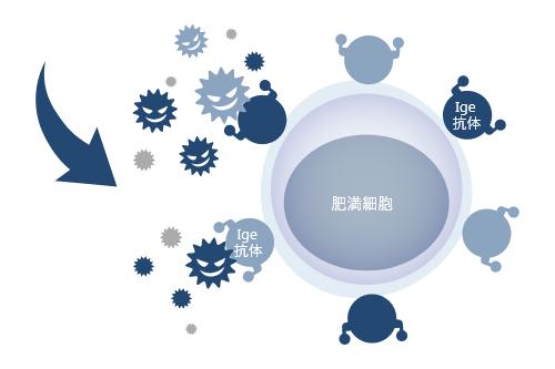 花粉(抗原)とIge抗体の結合